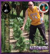 S.A.S Super Automatic Sativa brand new by Big Buddha!